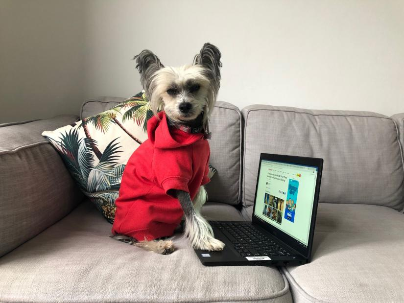 A small dog sitting on a couch wearing a coat, with her paw on an open laptop