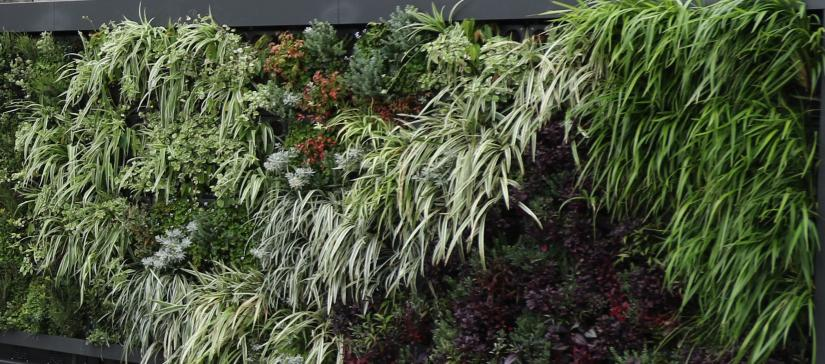A Breathing Wall composed of plants, special growing media and sensors has been installed in Campbelltown