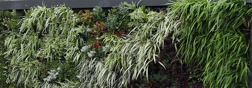 Campbelltown City Council has installed a green wall as part of a partnership with UTS and Junglefy.