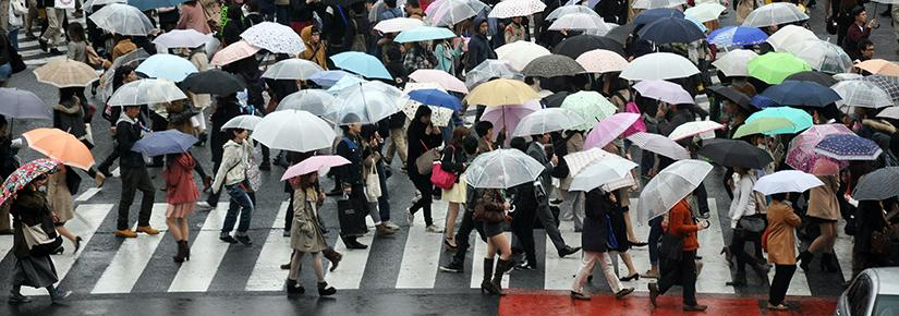 Crowds carrying umbrellas cross a city street