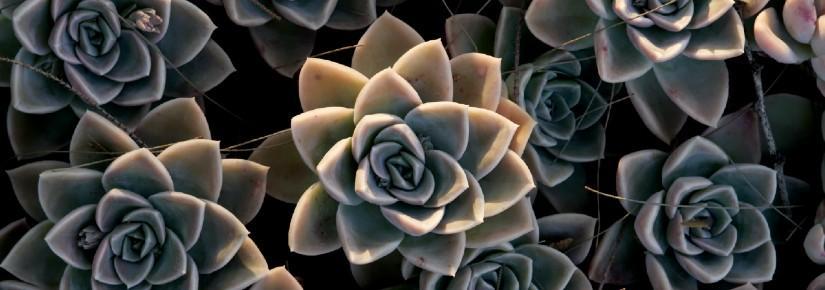 A close-up of succulents