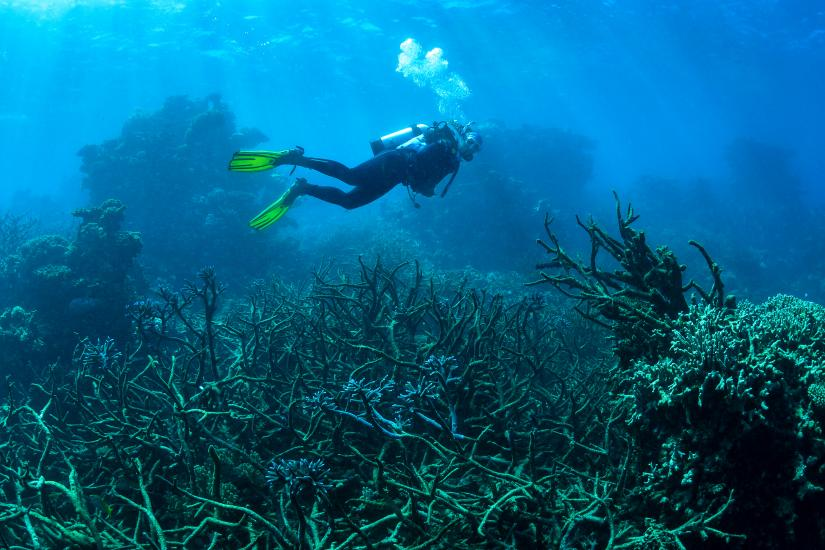 Emma Camp swims over corals affected by climate change