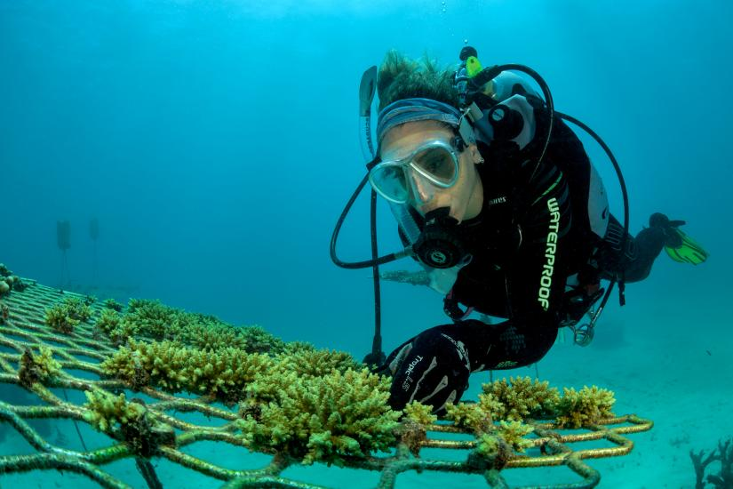 Emma Camp checks on coral nursery on the Great Barrier Reef