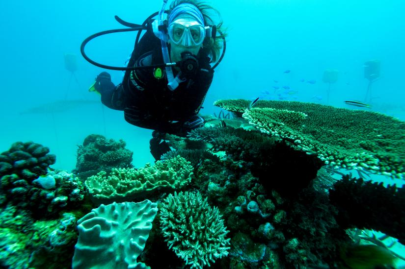 Emma Camp swims next to coral nurseries at Opal Reef