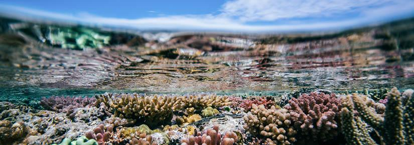 Underwater shot of healthy corals at Heron Island