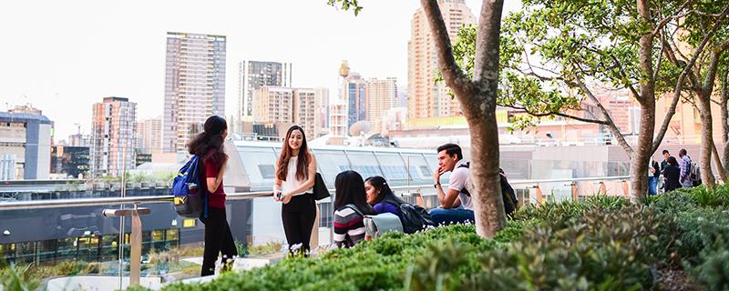 A group of students sit on an outdoor terrace, surrounded by trees and shrubs. The Sydney CBD is in view, in golden sunlight.