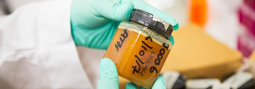 The research is intended to provide a strong evidence base for marketing honey as a health food with prebiotic properties. Photo by Andy Roberts