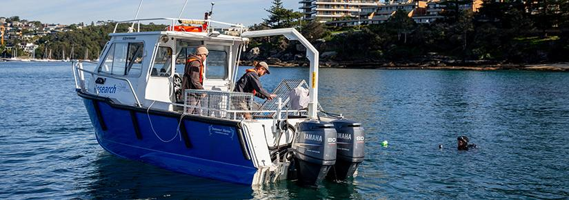 The research team at work placing new seahorse hotels in Sydney Harbour