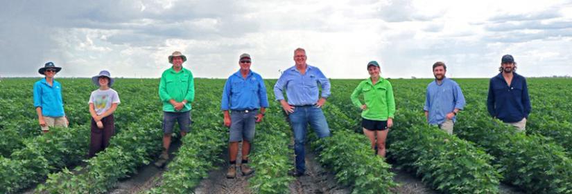 Rachel and her colleagues out in the cotton field.