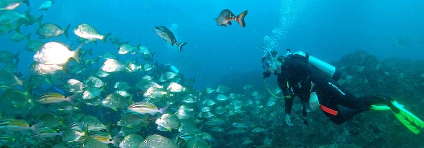 Diver underwater looking at school of fish
