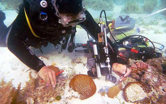 Underwater scuba diver examining coral