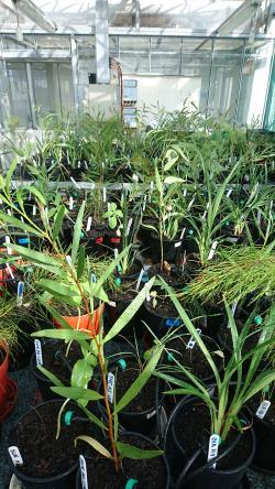 Plants in Megan Phillips glasshouse