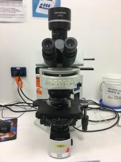 BX71 with DIC Optics