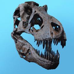 Dinosaur head fossil