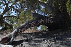Save the Murray Darling