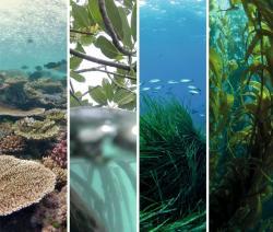 Six key holobionts form the foundation of coastal ecosystems: corals, macroalgae, seagrasses, mangroves