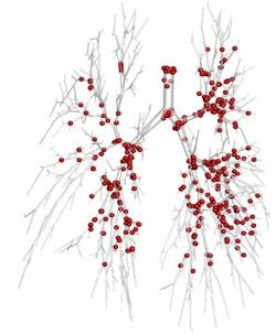 aerosol deposition in the lungs