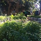 Ultimo garden